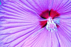Widescreen flower image, Marigold Grant 2017-03-04