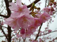 """Giardino di """"Hina-no-Yakata""""(Museo), Inatori-Onsen(Terme), Izu Shizuoka Japan (Febbraio)"""