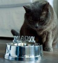 Miska dla kota MIAOW RIVIERA MAISON