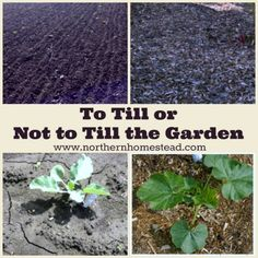 Composting Hacks To Till or Not to Till the Garden is the question. Here we explain when tilling and digging the soil is a good idea, and when it can and should be avoided. Organic Soil, Organic Gardening, Gardening Tips, Vegetable Gardening, Veggie Gardens, Urban Gardening, Garden Soil, Edible Garden, Garden Bags