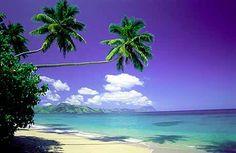 Fijian beach. I'm not a beachy girl, but I loved the beaches if Fiji.