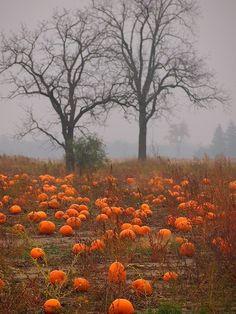 """a-autumn-dream: """"Fuente:moonandtrees """""""