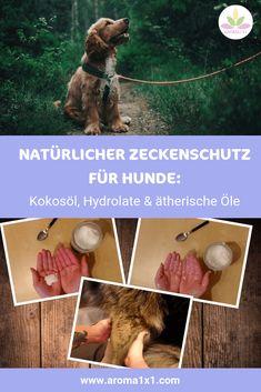 Natürlicher Zeckenschutz für Hunde: Kokosöl & Co.  AROMA 1x1 Doterra, Aromatherapy, Lotion, Essential Oils, Diy, Animals, Tricks, Blog, Beauty