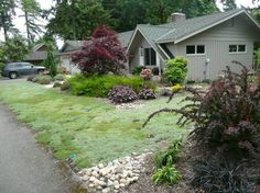 Creeping Thyme lawn I bet it smells amazing no mowing Low Water Landscaping, Garden Landscaping, Permaculture Design, California Garden, Ground Cover Plants, No Rain, Yard Design, Edible Garden, Creeping Thyme