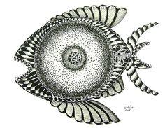 Now that's a googly Eye !