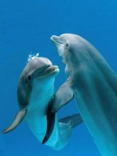 BLOG OBRAZKI: DELFINY Beautiful Creatures, Animals Beautiful, Cute Animals, Orcas, Dolphin Photos, Dolphin Images, The Ocean, Ocean Life, Dolphins Animal