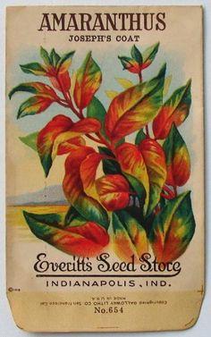 EVERITT'S SEED STORE,  Amaranthus 654, Vintage Seed Packet, sp