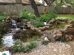 Michael's Backyard Pond with Waterfall and Bog Filter