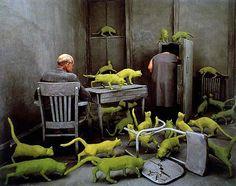 Radioactive Cats by Sandy Skoglund, Cibachrome print. New Exhibit - Cat Art vs. Dog Art: A Showdown at the Blanton Museum Photoshop, Sandy Skoglund, Michael Sowa, Blanton Museum, Instalation Art, Monochromatic Color Scheme, Cindy Sherman, Artistic Installation, Principles Of Design