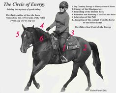 A Matter of Contact© by Elaine Ward. Since Western Style Dressage has become more popular, I have seen a plet. Horse Exercises, Horse Riding Tips, Show Jumping, Western Style, Dressage, Exploring, Training, Horses, Goals