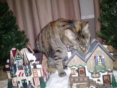 Cat vs Christmas Villagers