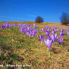 Buongiorno da || Emilia Romagna Meteo || Bellissimo scatto presso il Rifugio Città' di Forli' ai Prati della Burraia crinale forlivese. È' l'ora della Primavera!  Seguici su http://ift.tt/1M5TiBR e su Facebook  #appennino #ig_forlicesena #crocus #spring #show_us_nature  #turismoer #phototag_it  #emiliaromagna #emiliaromagna_city #Romagna  #igersemilia #igersitalia #igersemiliaromagna #igersromagna #emiliaromagna_city #loves_meteo #italia_landscape #loves_emiliaromagna #passione_fotografica…