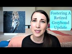 Fostering A Retired Greyhoud Update | MamaKatTV
