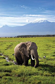 safari au pied du Kilimandjaro