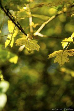 Autumn colors - 2012