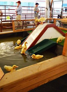 Okay, it's silly but I definitely want to see a duckling pond with slide at my next county fair!