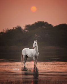 Rare Horse Breeds, Riding Holiday, Marwari Horses, Rare Horses, Special Pictures, Spring Photos, Rajasthan India, Equine Photography, Horse Riding
