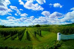 Wine Country in France by Kay Kochenderfer