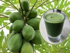 How To Drink Papaya Leaf Juice To Detoxify Liver, Reverse Fatty Liver And Stop Liver Cancer. The leaves of papaya are very useful in healing and curing Liver Detox Cleanse, Detox Your Liver, Body Detox, Jus Detox, Liver Diet, Body Cleanse, Natural Detox Drinks, Natural Cleanse, Natural Healing