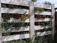 Vertical Succulent Garden With Wooden Pallet