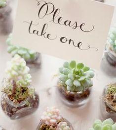 Les dragées de mariage peuvent être remplacées par des petites plantes