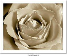 """White sepia rose - Rose core zoom in - monochrome white sepia."" - Art Print from FreeArt.com"