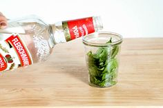 How to Extract Mint Oils from Leaves: 7 Steps - wikiHow 7/11/13 - picked mint and packaged it with 80 proof vodka.  sat out in sun.... pending few weeks to see how it's going.  vodka is already turning color, hopefully it's taking!