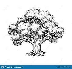 Oak Tree Drawings, Tree Drawings Pencil, Tree Sketches, Art Drawings Sketches, Tree Pencil Sketch, Drawing Trees, Drawing Art, Tree Illustration, Ink Illustrations