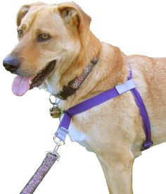 Halti Harness No Pull Harness Multi Functional And With
