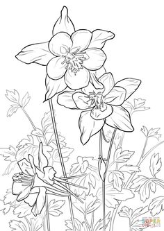 Rocky Mountain Columbine Coloring Page