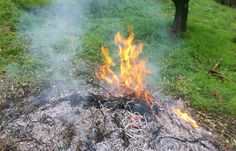 Toscana: gli scarti si bruciano. La legge 116 dell'11 agosto converte il DL #campolibero del 24 giugno 2014   Floraviva