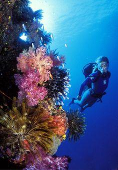 Fiji Scuba Diving & Snorkeling  Paradise, Fiji Style