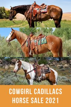 The 2021 Cowgirl Cadillacs Horse Sale presented by COWGIRL will feature another set of gentle, classy, fancy-broke horses consigned exclusively by women! Broken Horses, All The Pretty Horses, Horses For Sale, The Past, Kitty, Fancy, Animals, Little Kitty, Kitten