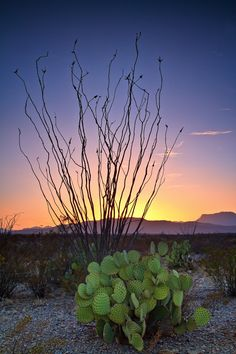 Great photo used to inspire Lexie and Mac's escape from Ryan. [Ocotillo Sunset, Big Bend National Park, by Anne McKinnell] Beautiful World, Beautiful Places, Go Camping, Outdoor Camping, Camping Hacks, Closer To Nature, Landscape Photographers, State Parks, Virginia