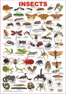 Insects are eaten by many people in Thailand as a snack. Insects are eaten fried, baked, and raw. Many Thai people enjoy eating insects that sometimes that they eat insects as a whole meal with rice. Some of the insects that are eaten are big as well. Grammar And Vocabulary, English Vocabulary Words, Learn English Words, English Grammar, English Alphabet, English Tips, English Study, English Class, English Lessons
