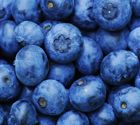 Blueberry dog food - simple recipe- add 1 pint fresh berries to 3 lbs cooked ground beef, 2 large mashed sweetest potatoes, c olive oil, c flaxmeal, c fresh chopped parsley Fast Weight Loss, Healthy Weight Loss, How To Lose Weight Fast, Reduce Weight, Reduce Belly Fat, Lose Belly Fat, Can Dogs Eat Strawberries, Types Of Berries, Freezing Fruit