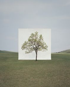 Myoungho Lee_Tree #14