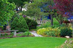 Conrad Art Glass & Gardens: Conifers... more Picea, 3rd in a series