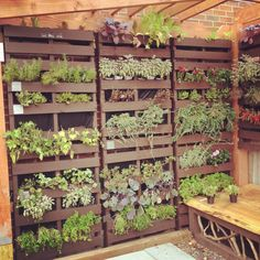This is a great pallet garden idea. Can be used as a privacy screen, a divider, or to cover not-so-pretty chain link fence while adding vertical gardening space.
