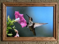 Medium 12 by 18 inch Hummingbird by CrazySwanPhotography on Etsy