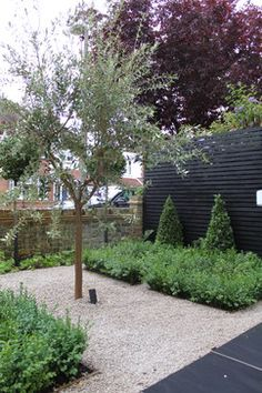Jev`s design contemporary Olive tree, gravel, box hedging and bay tree cones Small Front Garden Ideas Uk, Small Front Gardens, Back Gardens, Gravel Garden, Veg Garden, Garden Landscaping, Gardening Vegetables, Contemporary Garden Design, Contemporary Landscape
