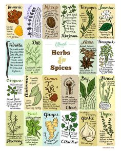 Herbs & Spices -- Edible Ink, a Bambi Edlund illustration Healing Herbs, Medicinal Plants, Common Spices, Garden Journal, Spices And Herbs, Edible Plants, Growing Herbs, Herbal Medicine, Herb Garden