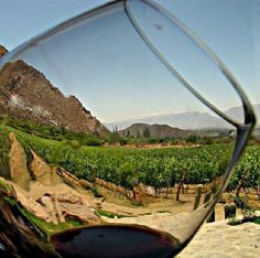 through the looking glass. creative shot of the vineyards at Whitehall Lane.