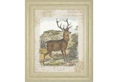 CLART8185-WOODLAND STAG 1 BY WILD APPLE PORTFOLIO