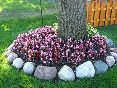 backyard designs – Gardening Ideas, Tips & Techniques Landscaping Around Trees, Landscaping With Rocks, Outdoor Landscaping, Front Yard Landscaping, Backyard Landscaping, Landscaping Ideas, Gardening For Beginners, Lawn Care, House Front