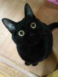そ、そんな目で見つめないで…! ご飯を一心におねだりする黒猫ちゃん