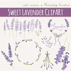 Lavender Sprigs Clip Art / Photoshop Brushes / Hand Drawn Elements / Herbal Foliage Leaves Twigs Branches / Vector / Commercial Use Pocket Scrapbooking / Project Life / Journaling / Memory Keeping Photoshop Brushes, Png Vector, Cliparts Free, Logo Floral, Branch Vector, Clip Art, Laurel Wreath, Clips, Tattoo Ideas