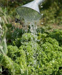 Growing kale and chard Dream Garden, Bird Feeders, Diy And Crafts, Outdoor Decor, Gardening, Zero Waste, Kale, Garden Ideas, Tips