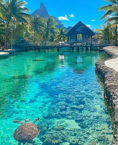 This is also one of my dream vacations where I want to go in the future, Bora Bora, French Polynesia. Beautiful Places To Travel, Cool Places To Visit, Pictures Of Beautiful Places, Beautiful Vacation Spots, Amazing Places On Earth, Dream Vacation Spots, Beautiful Hotels, Beautiful Gorgeous, Stunning View