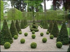 Formal Topiary Garden with Boxwood Balls, Cone Evergreens, Square Ash Trees, and Gravel Surround.